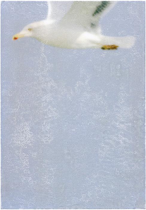 Die weißen Tauben sind Möwen